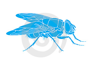Fly Royalty Free Stock Photography - Image: 10222477