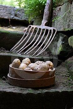 Bunch Of Potatoes Stock Photography - Image: 10226532