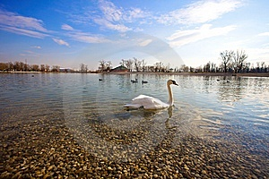 Swan And Duck On The Lake Royalty Free Stock Photography - Image: 10231487