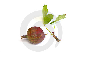 Gooseberry Stock Photos - Image: 10242733