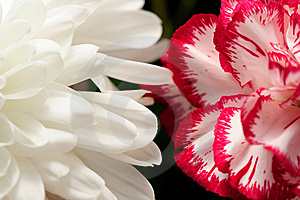 Flowers Contrast Royalty Free Stock Image - Image: 10246536