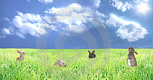 Rabbits On A Glade Stock Photos - Image: 10249193