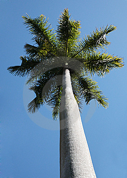 Palm Tree Stock Photography - Image: 10249382