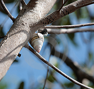 Live Snail Royalty Free Stock Images - Image: 10249439