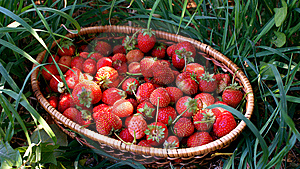 Strawberry In A Basket Royalty Free Stock Photo - Image: 10251615