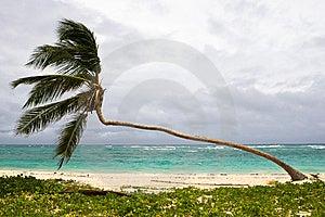 Palm On The Beach Island Stock Photos - Image: 10256743