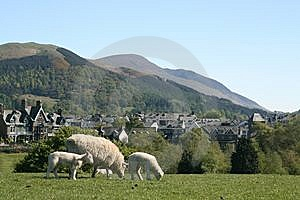Sheep And Hills Stock Photography - Image: 10260862