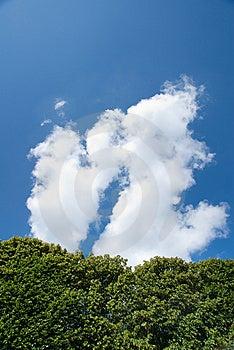 Tree Against Blue Sky Stock Photo - Image: 10261490