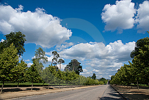 Tree Against Blue Sky Royalty Free Stock Photography - Image: 10261497