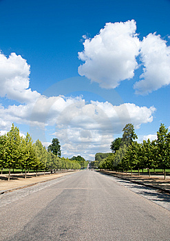 Tree Against Blue Sky Royalty Free Stock Photos - Image: 10261498