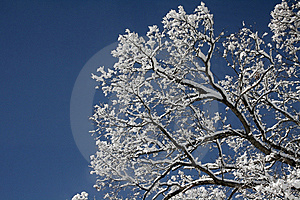 Winter Trees Royalty Free Stock Image - Image: 10274036