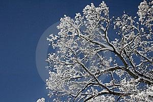 Winter Trees Royalty Free Stock Image - Image: 10274036