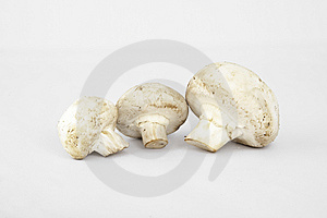 Three Mushrooms Royalty Free Stock Photo - Image: 10274765
