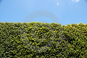 Tree Against Blue Sky Royalty Free Stock Photos - Image: 10275308