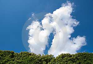 Tree Against Blue Sky Royalty Free Stock Image - Image: 10275356