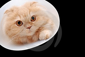 Cat Trying To Climb Through A Tunnel. Royalty Free Stock Images - Image: 10276109
