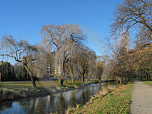 Weeping Willows Royalty Free Stock Photography - Image: 10283697