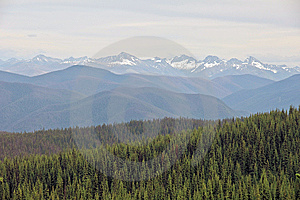 Endless Forest Royalty Free Stock Image - Image: 10287026