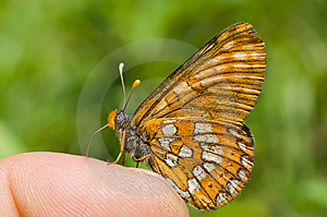 Butterfly On Finger 2 Stock Photography - Image: 10289342