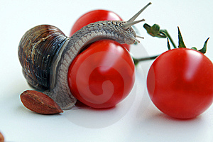 Snail-researcher Stock Image - Image: 10306361