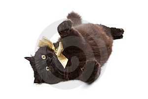 Black Cat Wearing Golden Bow Isolated Royalty Free Stock Photos - Image: 10312018