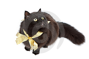 Black Cat Wearing Golden Bow Isolated Stock Image - Image: 10312021