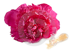 Peony Flower And Perfume Bottle Isolated Royalty Free Stock Photos - Image: 10312288