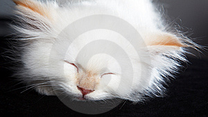 Cat Sleeping Royalty Free Stock Images - Image: 10314749