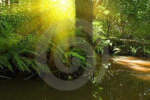 Stream Royalty Free Stock Images - Image: 10319109