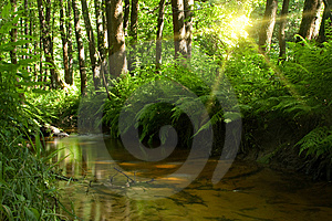 Stream In Forest Royalty Free Stock Image - Image: 10319186