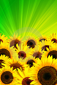 Yellow Sunflowers Petals Background Stock Photography - Image: 10344392