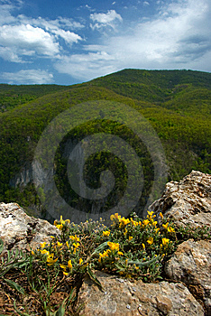 Flowering At The Edge Of The Mountain Stock Image - Image: 10346511
