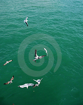 Brighton Seagulls Flying In The Air Stock Photo - Image: 10355050