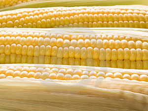 Corn. Stock Photos - Image: 10358623
