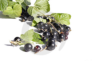 Black Currant Royalty Free Stock Image - Image: 10359126