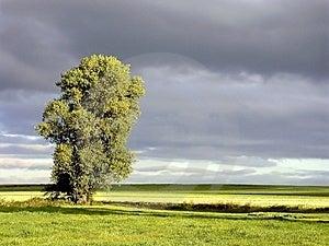 Landscape Of Early Autumn Tree At Sunrise Stock Image - Image: 10361901