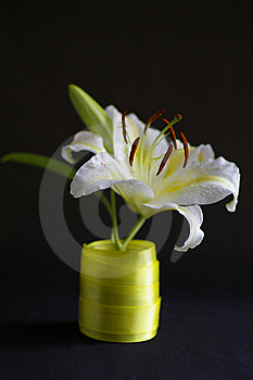 Lily Stock Photography - Image: 10363102