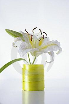 White Lily Stock Photos - Image: 10363133