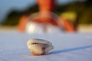 A Shell Stock Photos - Image: 1040803