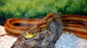 Eyes Of The Serpent Stock Image - Image: 1064941