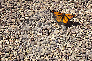 Monarch Royalty Free Stock Image - Image: 1074476