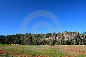 Kaibab National Forest, Arizona, USA Stock Image - Image: 10813231