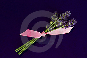Lavender Stock Image - Image: 10822751