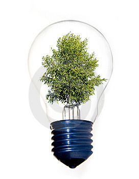 Tree in light bulb Royalty Free Stock Image