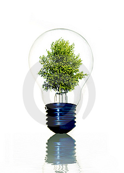 Tree in light bulb Stock Photo