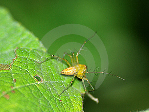 Spider On A Leaf Stock Photos - Image: 10840523