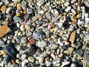 Free Stock Image - Shells and Pebbles Texture