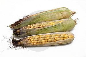 Corn Stock Image - Image: 10901661