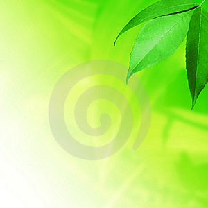 Fresh leaves on green Royalty Free Stock Photos