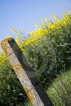 Oilseed Rape 5 Free Stock Images